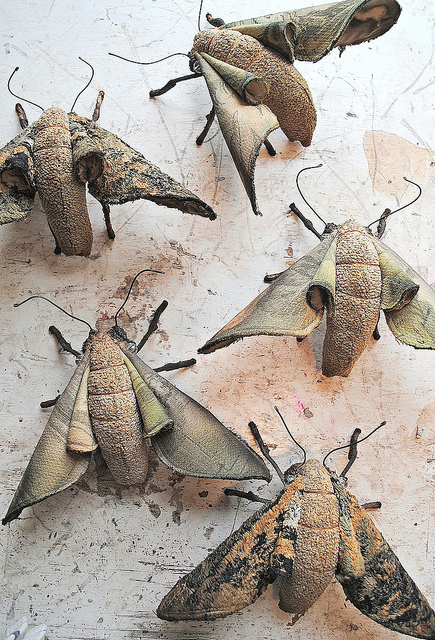 Forest Moths Copyright All rights reserved by ohmisterfinch